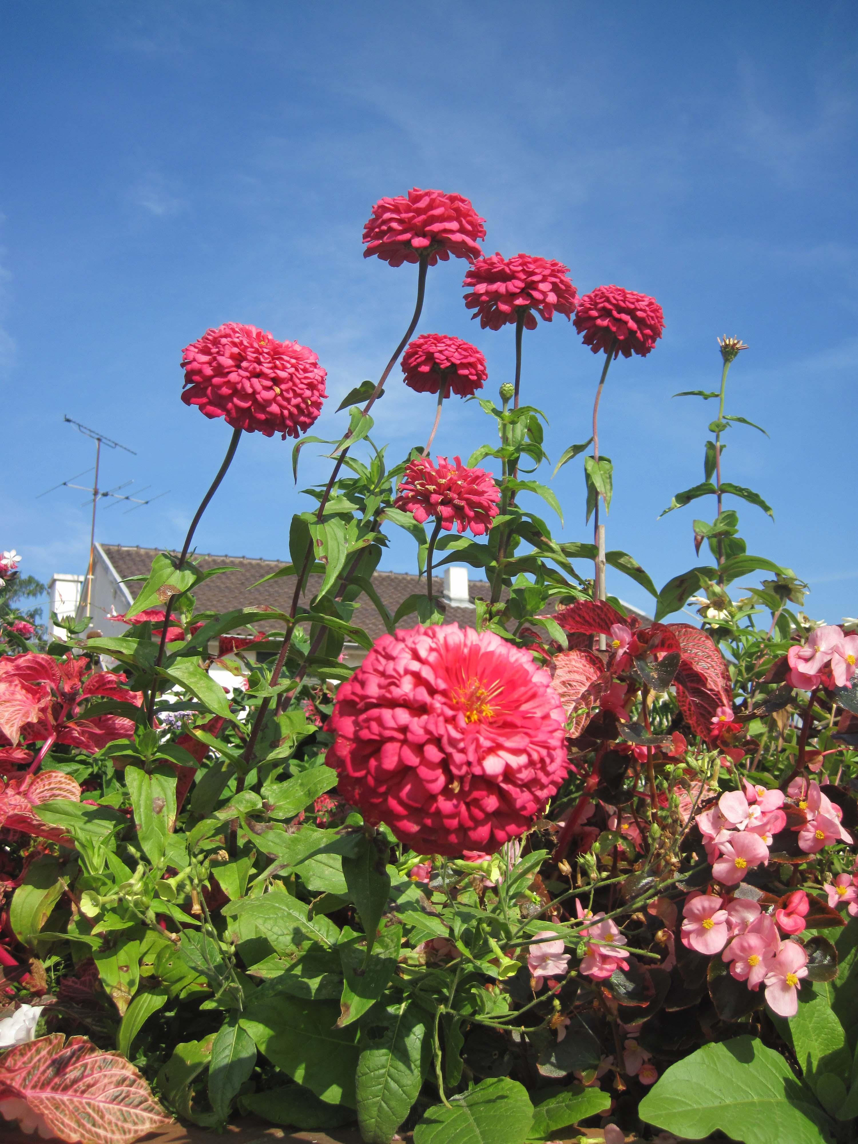 Flores en Saint Rémy