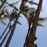 ¡Cuidado con los cocos de Kauai!