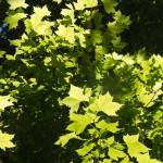 Verdor, sombra y frescor, algunos de los elementos que podemos encontrar en los jardines del Príncipe de Aranjuez.