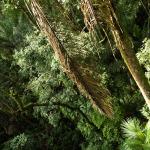 Lunes 27: El Parque Nacional Soberanía de Panamá visto desde una torre de observación en el Panama Rainforest Discovery Center