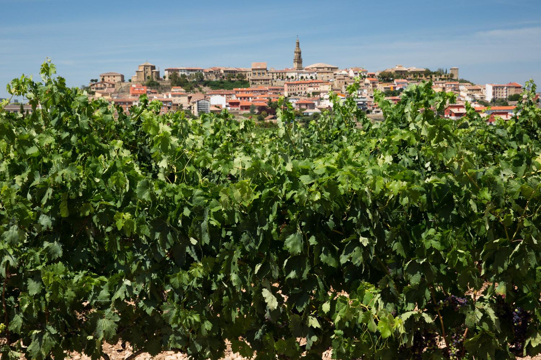 Viñedos y el pueblo de Briones, España