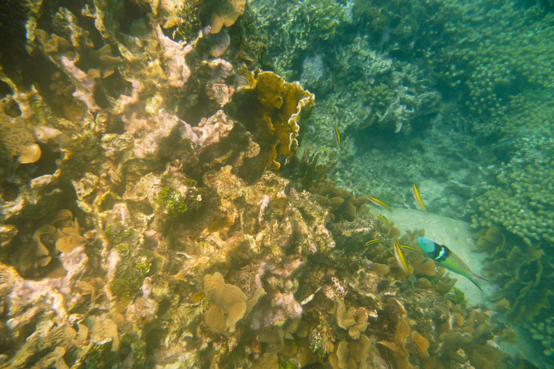 Arrecife de coral en Ordupdarbocuad, Panamá