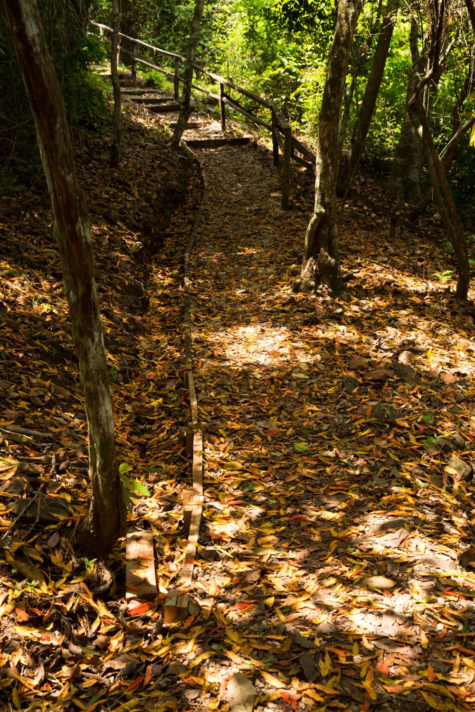 Sendero Los Caobos del Parque Metropolitano de Ciudad de Panamá