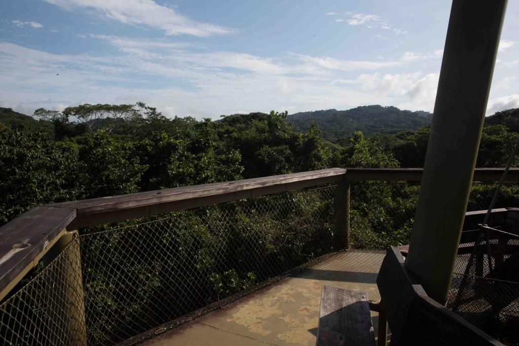 Torre de avistamiento de aves en el Panama Rainforest Discovery Center