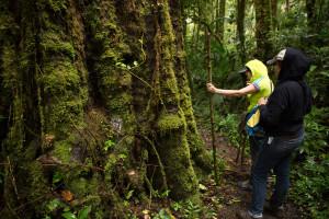Caminando por el sendero Los Quetzales, Panamá
