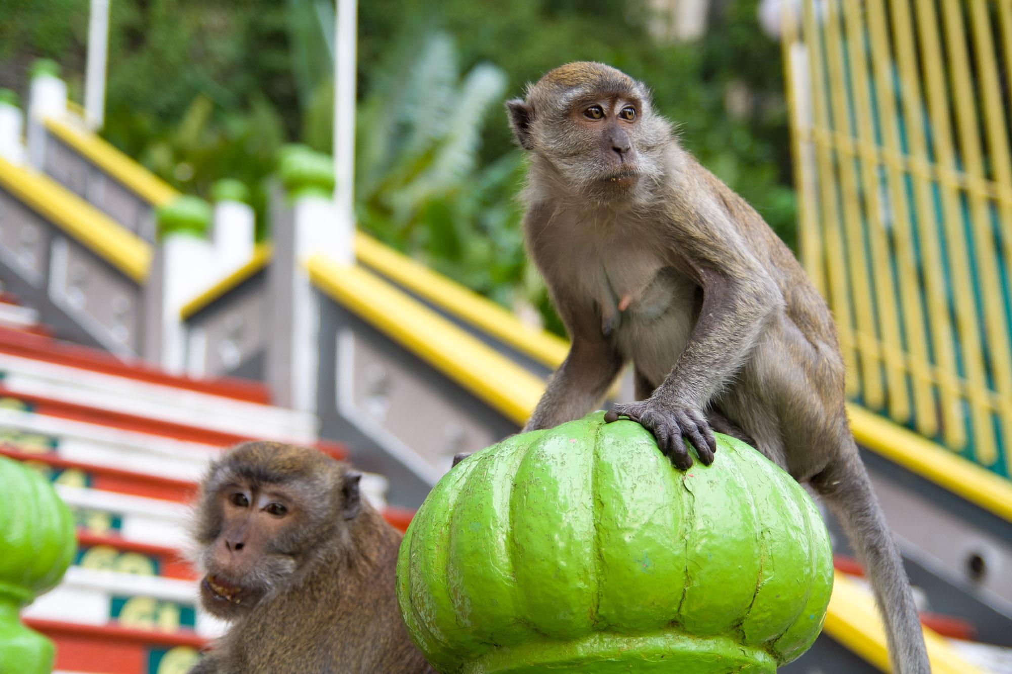Macacos, habitantes de las cuevas