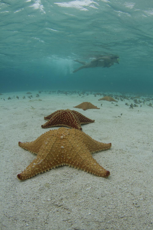 Estrellas de mar en un banco de arena conocido como piscina natural en Guna Yala o San Blas, Panamá