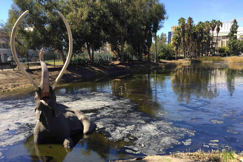 Representación de un mastodonte quedando atrapado en el asfalto de Lake Pit de La Brea Tar Pits, Los Ángeles, EE.UU.