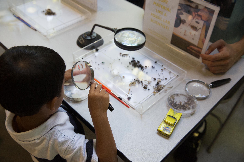 Separando fósiles en el museo George C. Page, La Brea Tar Pits, Los Ángeles, EE.UU.