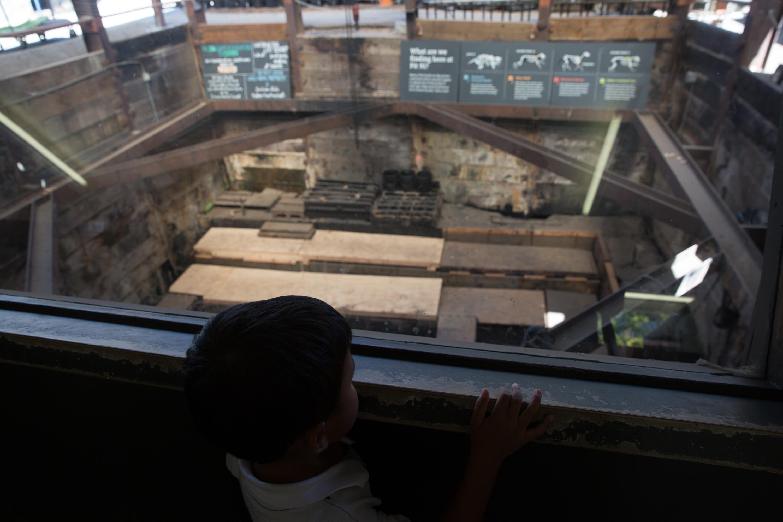 Visitando la excavación en el foso 91 de La Brea Tar Pits, Los Ángeles, California, EE.UU.
