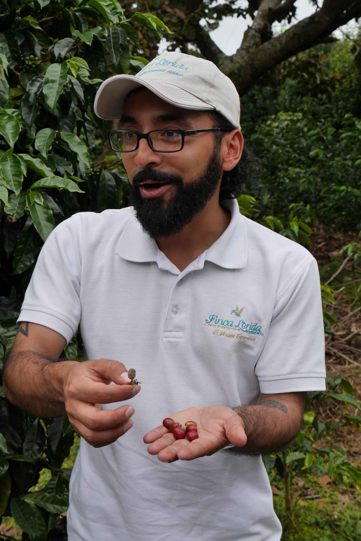 El guía César Caballero explica el cultivo del café en Finca Lérida, Boquete, Panamá