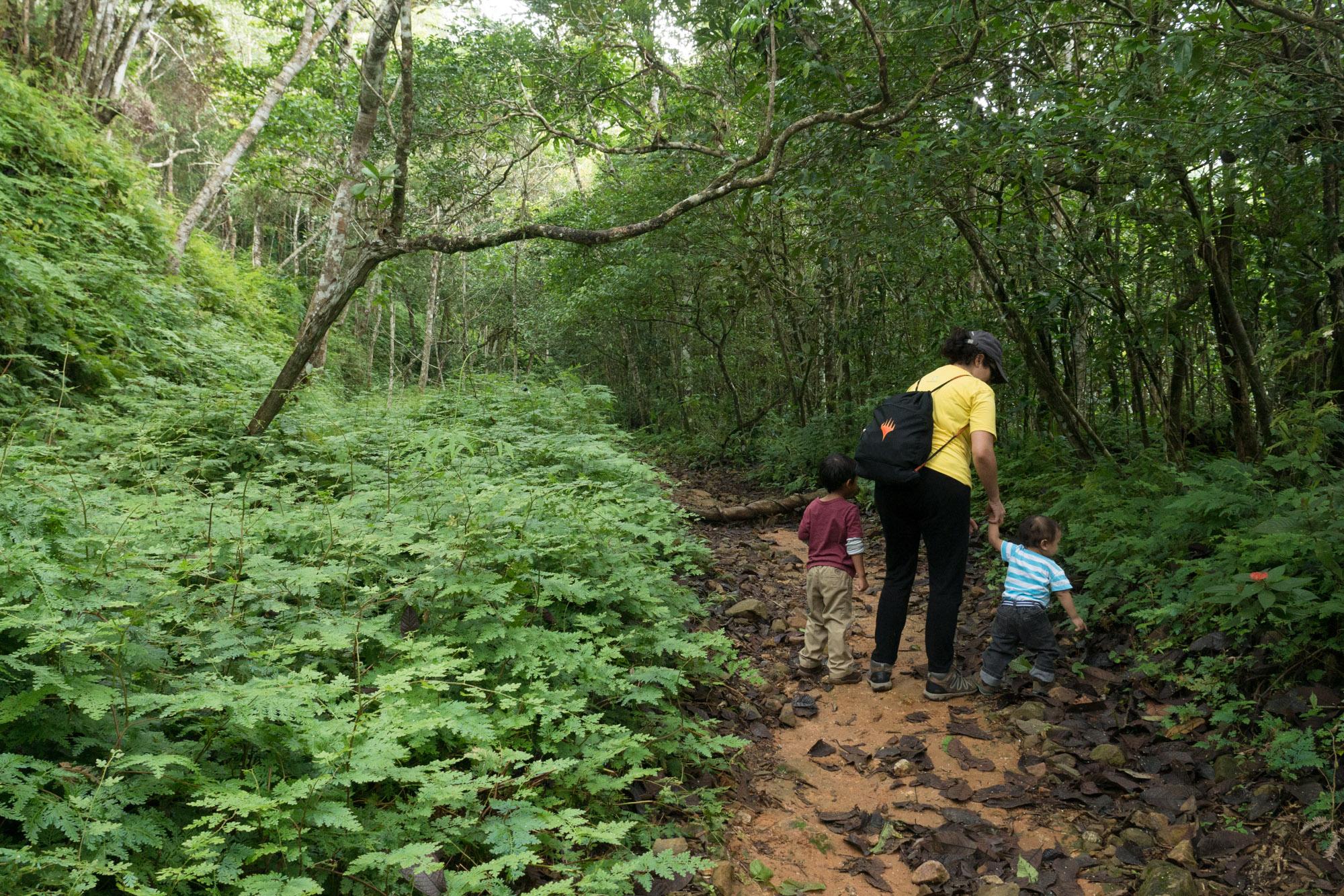 Caminando con niños en el sendero Panamá del parque nacional Altos de Campana, Panamá
