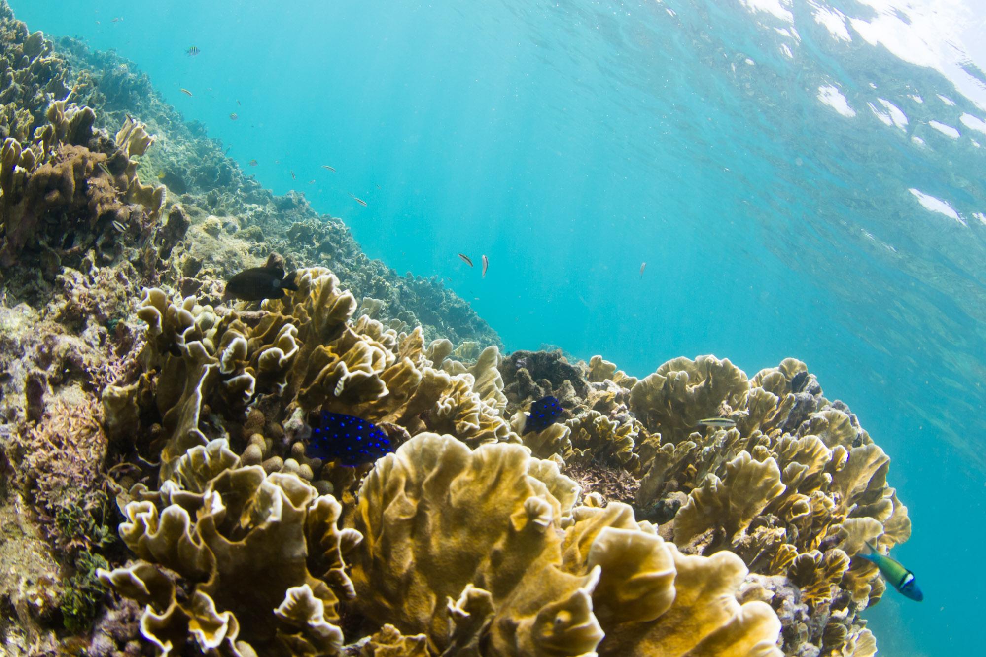 Arrecife de coral cerca de Playa Huertas, Portobelo, Panamá